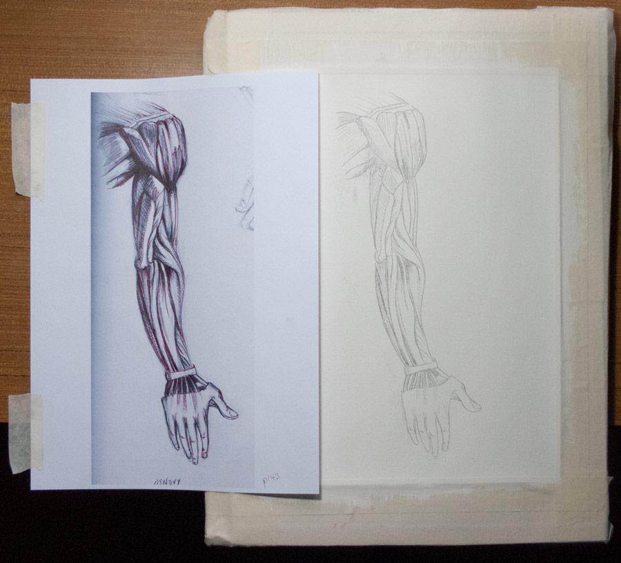 arm-transfer_0581