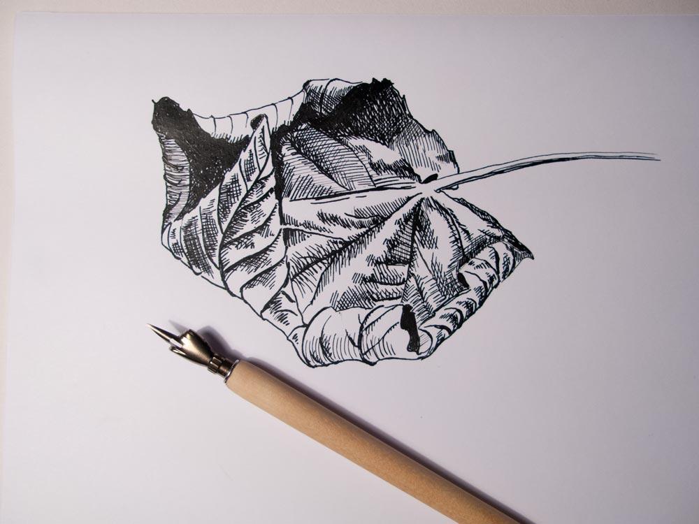 dip-pen-leaf_8180