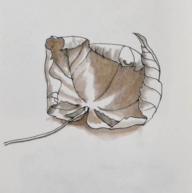 leaf-1_625-8909