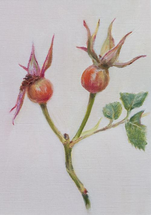rosehips_8825